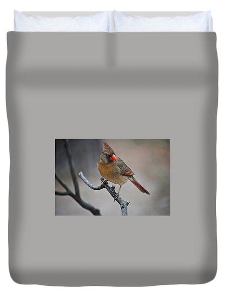 Lady Cardinal Duvet Cover by Skip Willits