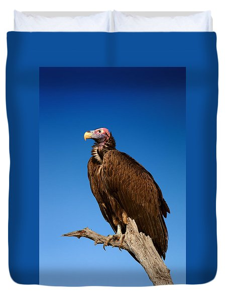 Lappetfaced Vulture Against Blue Sky Duvet Cover by Johan Swanepoel