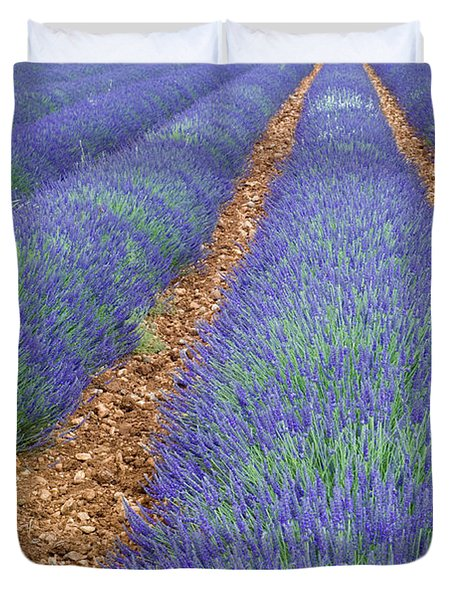 Lavendel 2 Duvet Cover by Arterra Picture Library