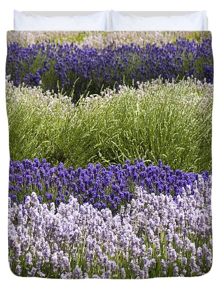 Lavender Bands Duvet Cover by Anne Gilbert