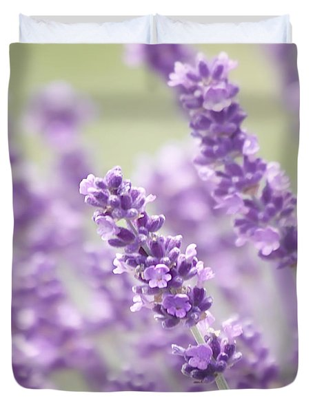 Lavender Dreams Duvet Cover by Kim Hojnacki