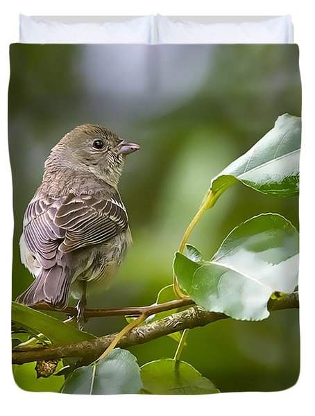 Lazuli Bunting Female 2 Duvet Cover by Sharon Talson
