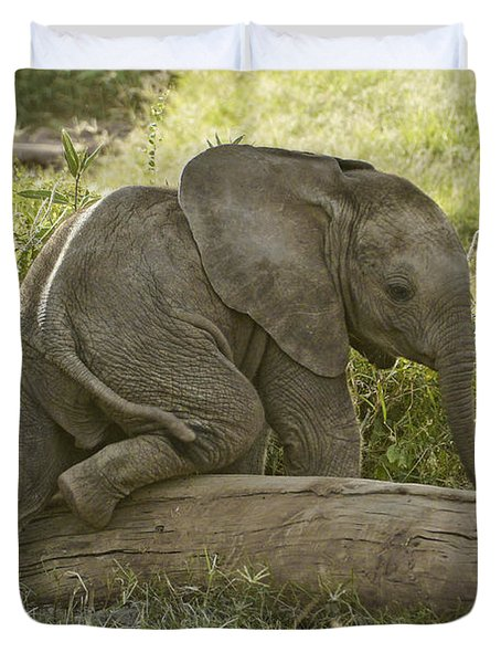 Little Elephant Big Log Photograph By Michele Burgess