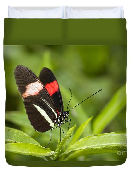 Longwing On A Leaf Duvet Cover by Bryan Keil