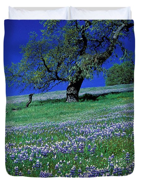 Lupine And The Leaning Tree Duvet Cover by Kathy Yates