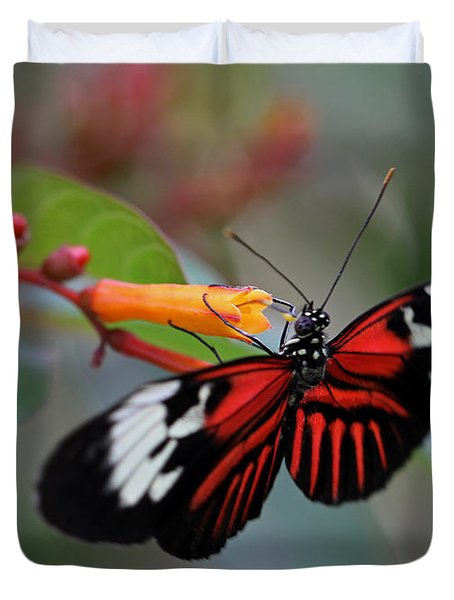 Madiera Butterfly Duvet Cover by Juergen Roth
