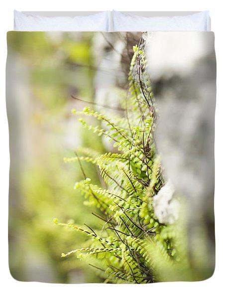 Maiden-hair Spleenwort Duvet Cover by Anne Gilbert