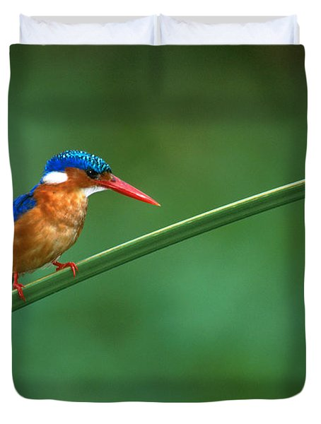 Malachite Kingfisher Tanzania Africa Duvet Cover by Panoramic Images