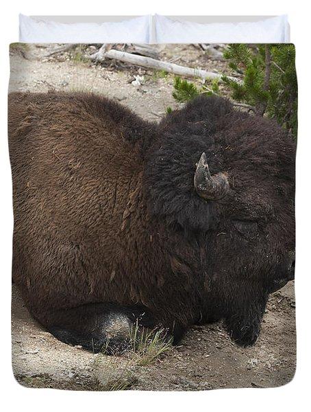 Male Buffalo At Hot Springs Duvet Cover by Belinda Greb