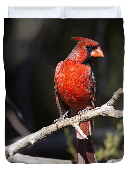 Male Northern Cardinal Duvet Cover by Gary Langley