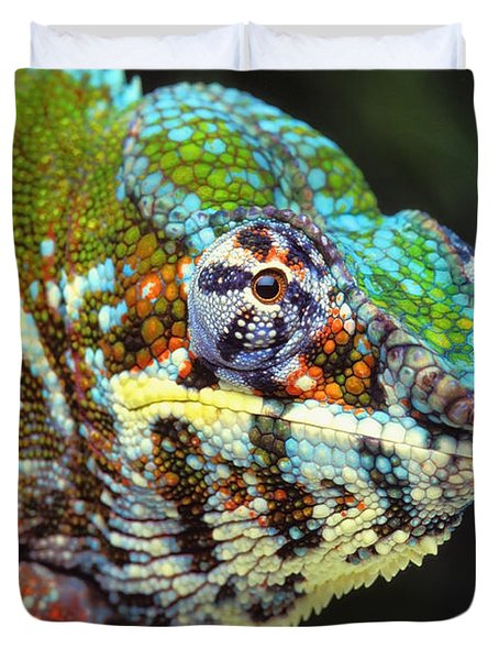 Male Panther Chameleon Furcifer Duvet Cover by Thomas Kitchin & Victoria Hurst