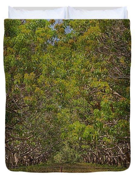 Mango Orchard Duvet Cover by Douglas Barnard