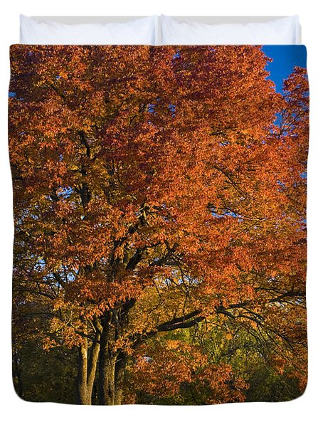 Maple Trees Duvet Cover by Brian Jannsen