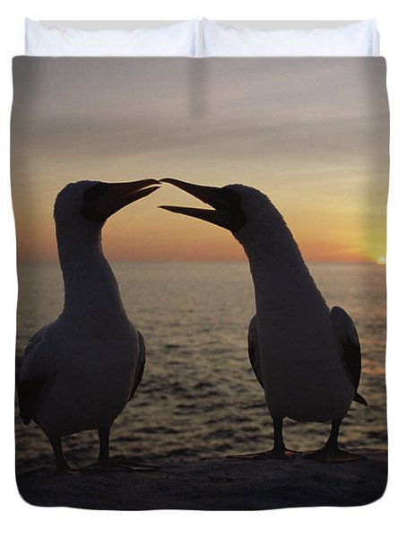 Masked Booby Couple Courting Galapagos Duvet Cover by Konrad Wothe