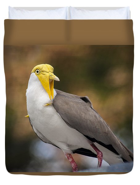 Masked Lapwing Duvet Cover by Carolyn Marshall
