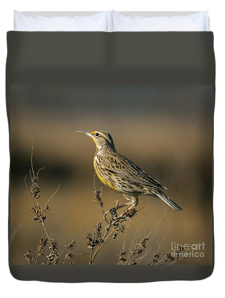 Meadowlark On Weed Duvet Cover by Robert Frederick