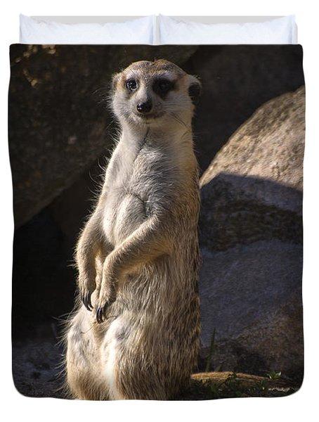 Meerkat Looking Forward Duvet Cover by Chris Flees