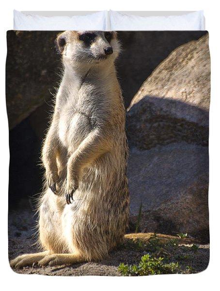 Meerkat Looking Left Duvet Cover by Chris Flees