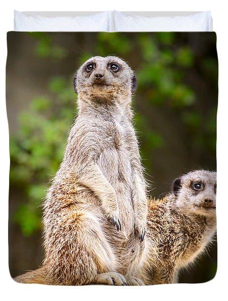 Meerkat Pair Duvet Cover by Jamie Pham