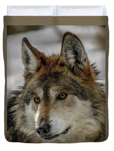 Mexican Grey Wolf Upclose Duvet Cover by Ernie Echols