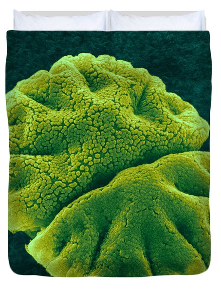 Duvet Cover featuring the photograph Micrasterias Angulosa, Algae, Sem by Science Source