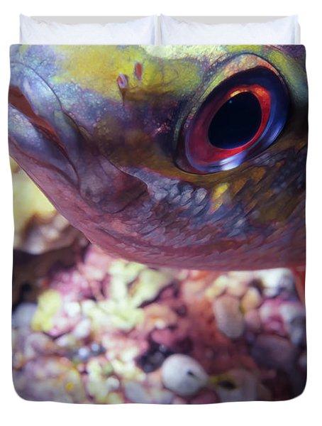 Miscellaneous Fish 5 Duvet Cover by Dawn Eshelman
