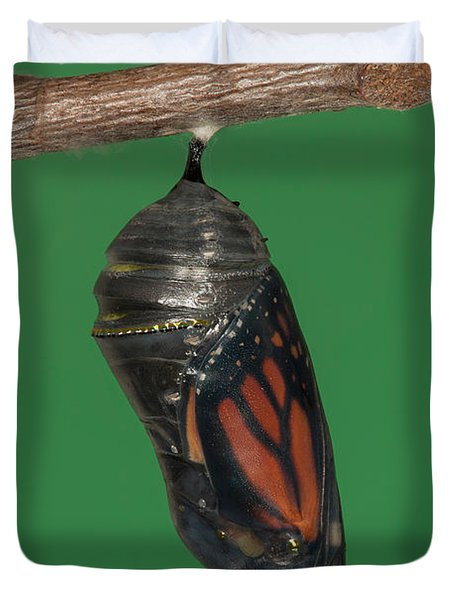 Monarch Butterfly Chrysalis IV Duvet Cover by Clarence Holmes