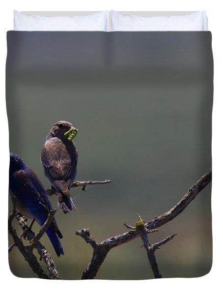 Mountain Bluebird Pair Duvet Cover by Mike  Dawson