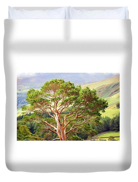 Mountain Pine Tree In Wicklow. Ireland Duvet Cover by Jenny Rainbow