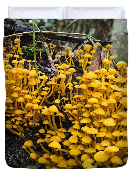 Mushrooms On Tree Trunk Panguana Nature Duvet Cover by Konrad Wothe
