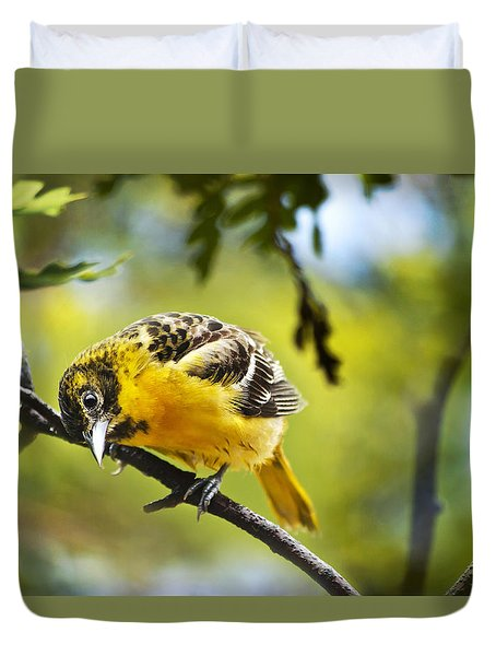 Musing Baltimore Oriole Duvet Cover by Christina Rollo
