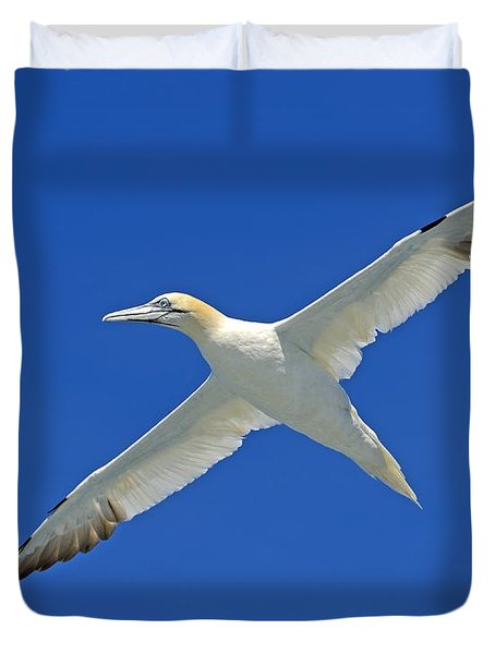 Northern Gannet Duvet Cover by Tony Beck