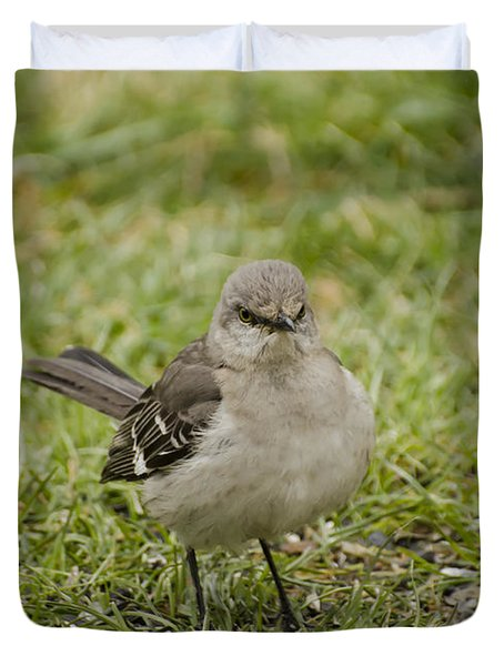 Northern Mockingbird Duvet Cover by Heather Applegate