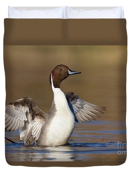Northern Pintail Wing Flap Duvet Cover by Bryan Keil