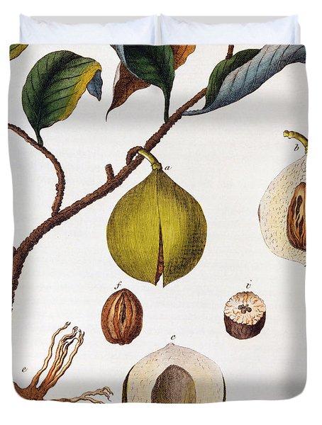Nutmeg Myrsitica Fragrans Duvet Cover by Anonymous