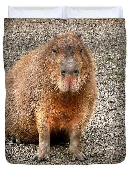 One Very Big Indifferent Rodent-the Capybara Duvet Cover by Eti Reid