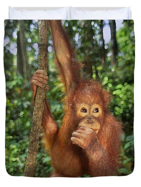 Orangutan  Duvet Cover by Frans Lanting MINT Images