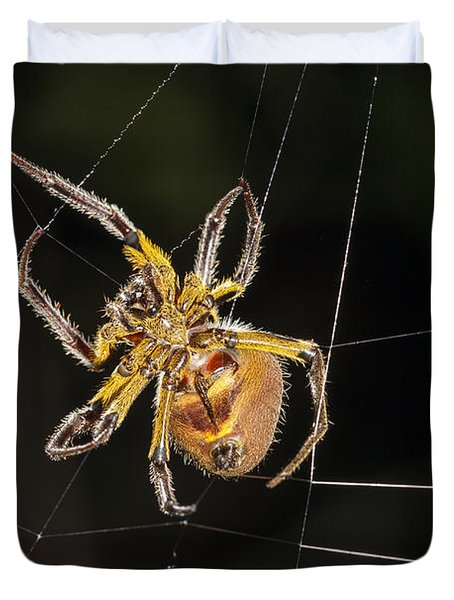 Orb-weaver Spider In Web Panguana Duvet Cover by Konrad Wothe