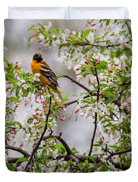 Oriole In Crabapple Tree Square Duvet Cover by Bill Wakeley