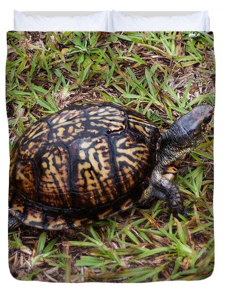 Box Turtle Duvet Cover by Mechala  Matthews