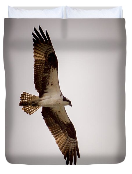 Osprey Duvet Cover by Ernie Echols