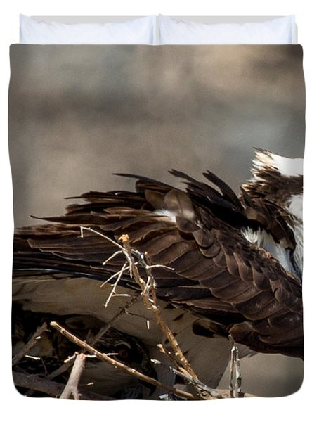 Osprey Family Huddle Duvet Cover by John Daly