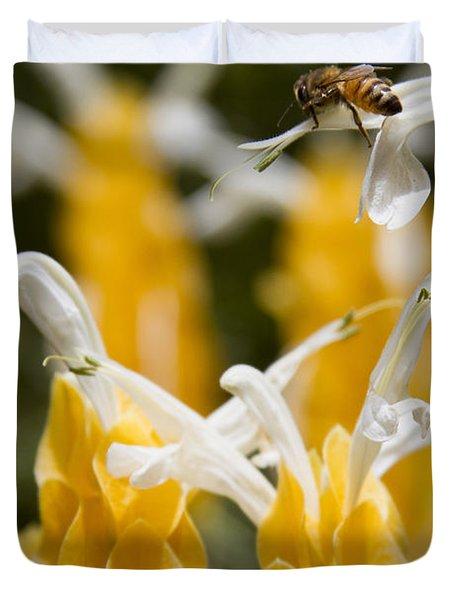 Pachystachys Lutea - Lollipop Plant - Golden Candle - Shrimp Plant Duvet Cover by Sharon Mau