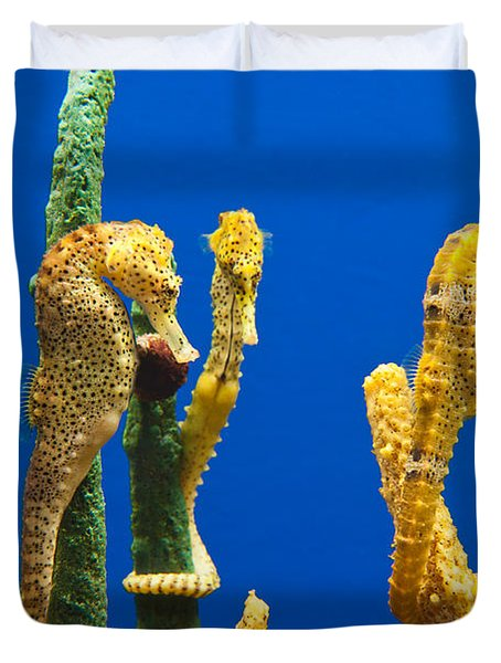 Pacific Seahorses Hippocampus Ingens Are Among The Giants Of Their World Duvet Cover by Jamie Pham