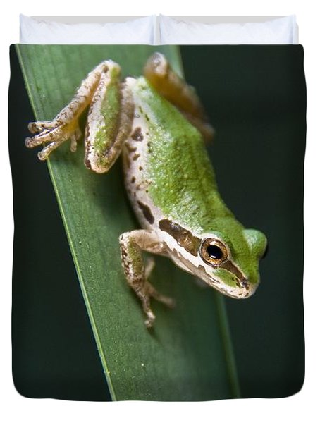 Pacific Tree Frog Pseudacris Regilla Duvet Cover by Jack Goldfarb