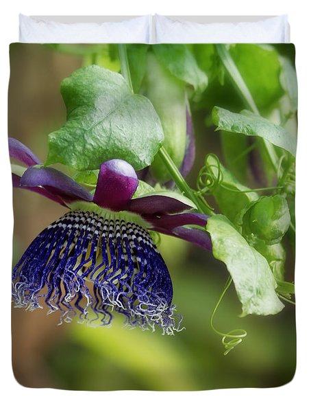 Passion Flower Ruby Glow Photograph By Kim Hojnacki