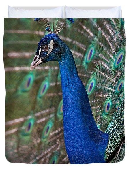 Peacock Display Duvet Cover by Susan Candelario
