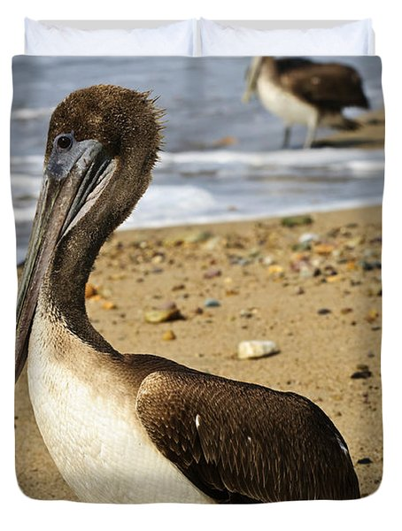 Pelicans On Beach In Mexico Duvet Cover by Elena Elisseeva