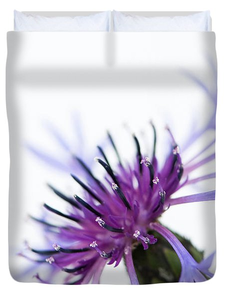 Perennial Cornflower Duvet Cover by Anne Gilbert
