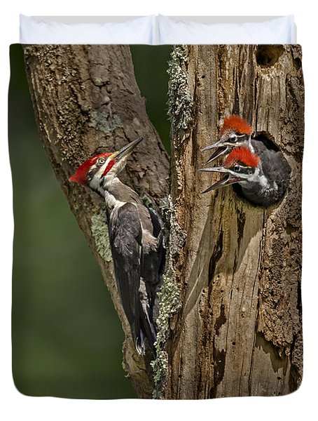 Pilated Woodpecker Family Duvet Cover by Susan Candelario